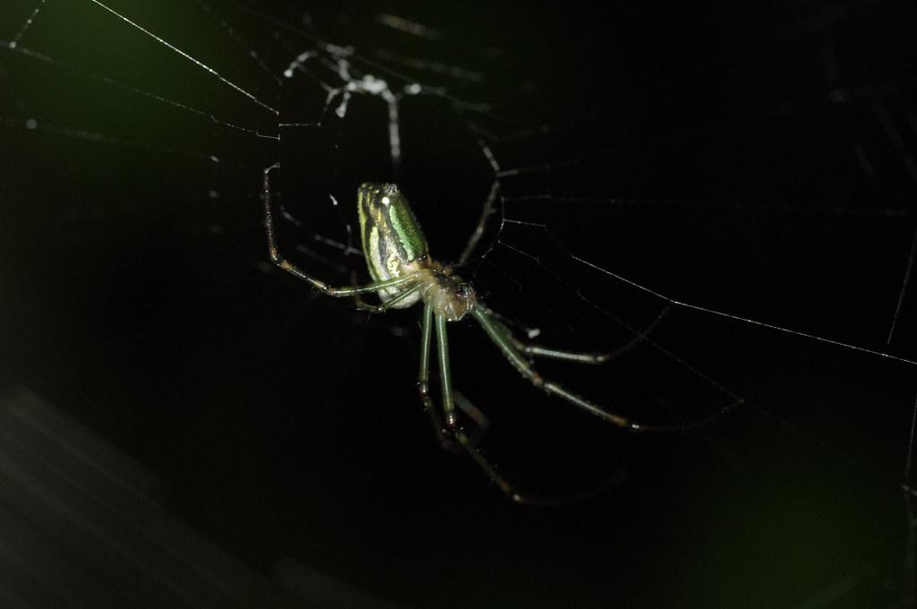 三芝入夜後的美麗生物-節肢動物
