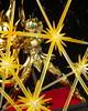 Aiolia - [Imagens] Aiolia de Leão Soul of Gold 19003190789_769e086083_t