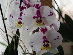 #Orquídies #Orquídias #orchids #Primavera #Spring #Haflorit!