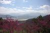 Sakura on the hills