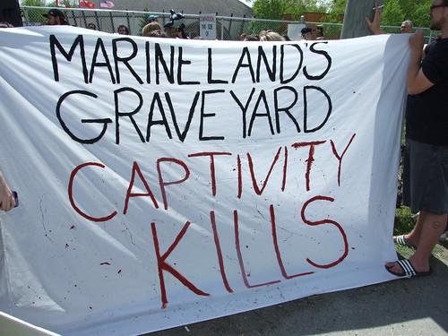 Marineland Animal Defense Demo - marineland graveyard: captivity kills
