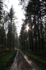 Chemin forestier, on dirait jurassien, mais non c'est à Bucey-les-Gy !