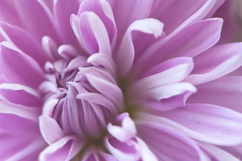 033 flower