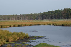 PHOTO: Blackwater National Wildlife Refuge in Maryland is one of 54 project sites that will benefit from Department of the Interior grants announced today. Credit: Ray Paterra/USFWS