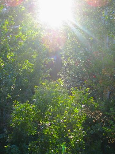 Sun Cynosure by JoseAngelGarciaLanda