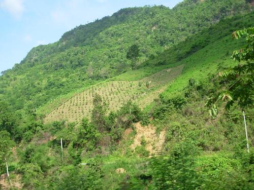 Luang Prabang-Vang Vieng-routee (25)