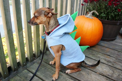 dog-dinosaur-costume
