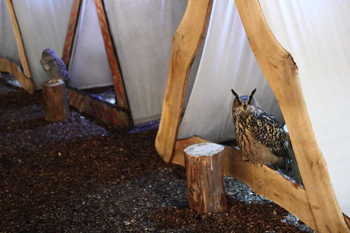 Owls on show