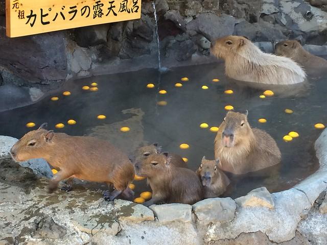 iPhone5sで撮影 冬の青春18きっぷの旅 伊豆シャボテン公園 2014年1月3日