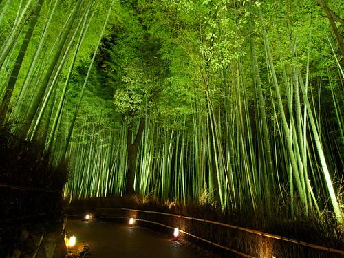 竹林の道 - 嵐山花灯路 / Arashiyama Hanatouro