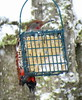 Northern flicker on feeder in snow 2