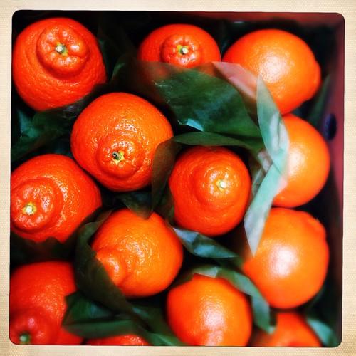 Citrus (41/365) by elawgrrl