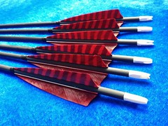 carbon arrows with feathers (2)