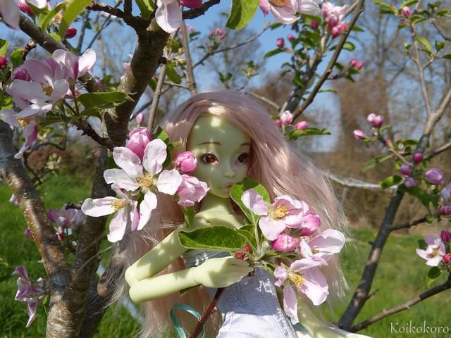 Absinthe, fleur parmis les fleurs