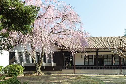 京都大学/Kyoto University