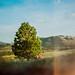 Real tree. by alindgren93