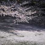 0404_chiyoda-36