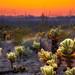 Prickly Garden by Eddie 11uisma