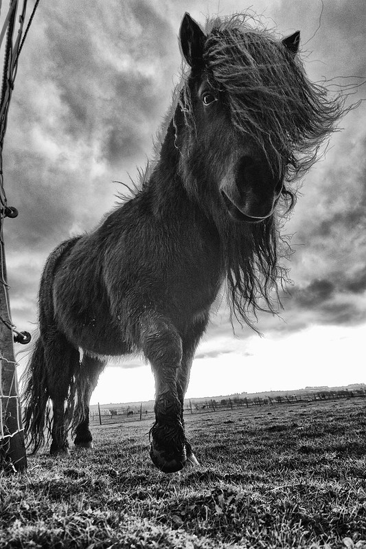 26 2 - Pony