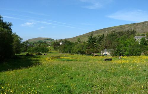 cottage field