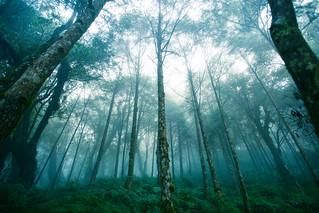 霧中的樹林-6-1226.jpg