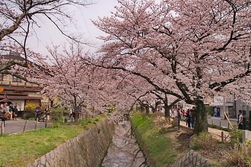 【写真】2013 桜 : 哲学の道/2018-12-24/IMGP9261