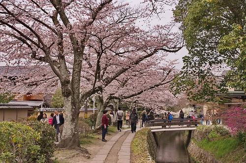 【写真】2013 桜 : 哲学の道/2018-12-24/IMGP9209