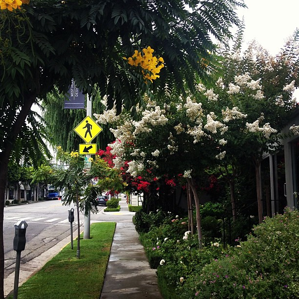 The jungle-like sidewalks of West Hollywood.
