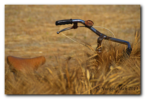 The old bicycle and the wheat.