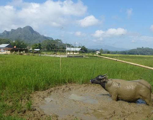 Sulawesi13-Rantepoao (11)