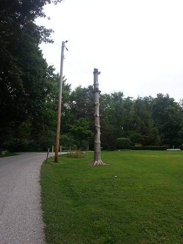 Future Totem Pole?