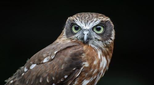 Owls @ Dragonheart, Enschede