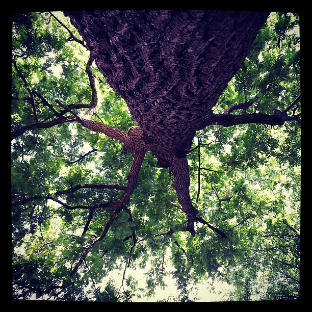 I love this tree