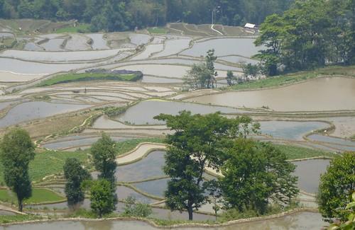 Yunnan13-Yuanyang 16-Qingkou (21)