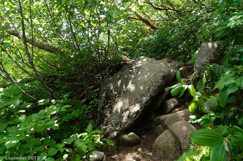 20130813 樹林帯