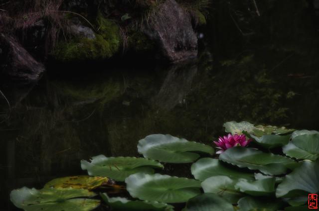 「静寂」 法起寺 - 奈良