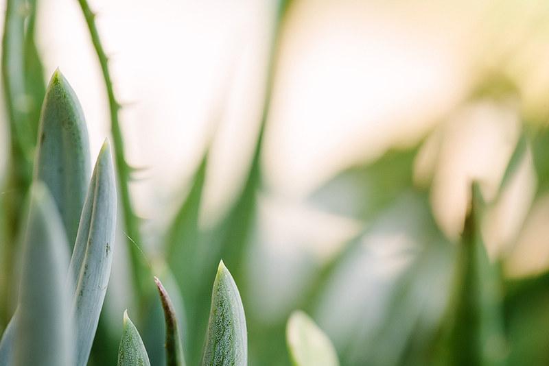 succulent_2web