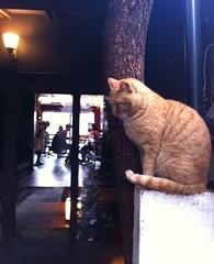 Kawa Cafe Kyoto
