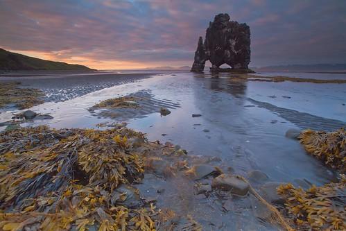 ocean sunset sea seascape seaweed nature water rock island bay iceland rocks northwest stack northern seastacks hunafloi hvítserkur northerniceland northwesticeland icelandbeach hunafloibay