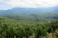 IMG_5480: Smokey Mountains