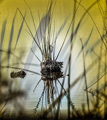 Rice Paper Wetland