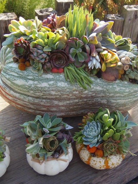 Laura Eubanks succulent topped pumpkins