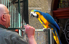 Parrot at the Mission Hotel