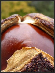 HERBST - Autumn ; Harvest;  autunno; autumnus; otoño; осень