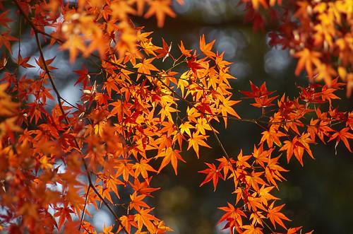 【写真】2013 紅葉 : 上御霊神社/2020-07-01/IMGP4187