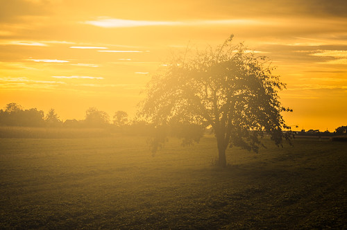 trees light orange plant tree green nature backlight germany landscape deutschland licht nikon europa europe availablelight natur pflanze meadow wiese grün landschaft bäume baum goldenhour backlighting gegenlicht weinheim badenwürttemberg d90 hemsbach goldenestunde verfügbareslicht mygearandme blinkagain