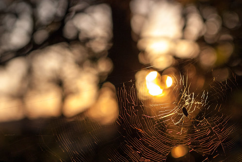 sunset sun nature animals silhouette spider kamakura spiderweb 85mm insects f18 夕日 蜘蛛 夕方 canon450d kissx2