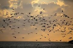 coastal sunrise #2