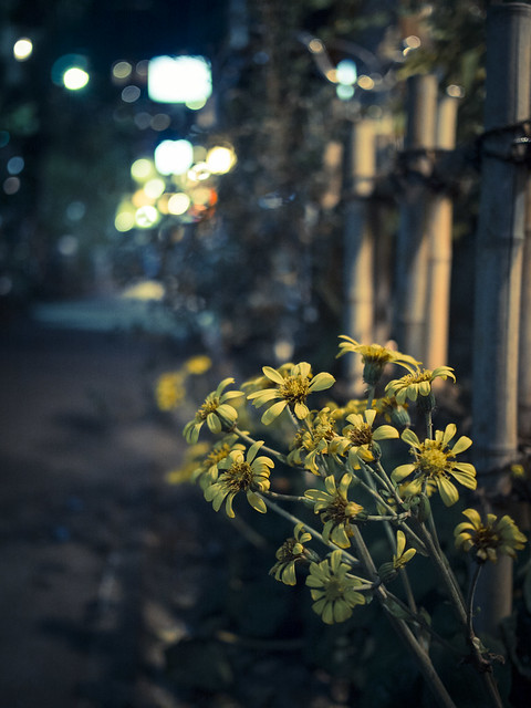 yellow flowers at night