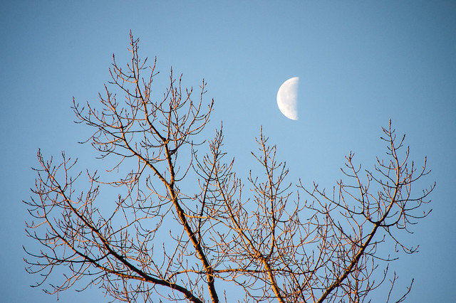 half moon over the trees